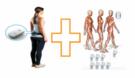 BTS FREEEWALK 无线表面肌电测试与步态分析系统
