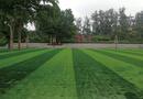 北京大学附属小学操场铺设人造草坪