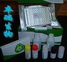 豚鼠端粒酶(TE)Elisa试剂盒