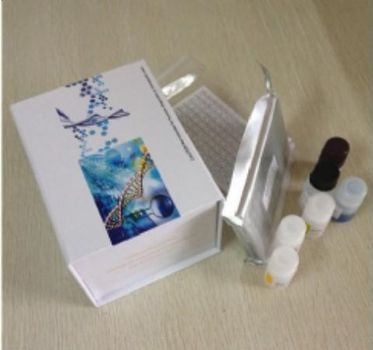 人细胞绒毛蛋白/埃兹蛋白(cytovillin/ezrin)ELISA试剂盒