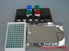 大鼠正常T细胞表达和分泌因子(RANTES/CCL5)ELISA试剂盒