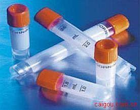 周期素依赖性激酶3(CDK3)抗体