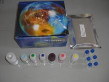人环磷酸腺苷(cAMP)ELISA试剂盒说明书