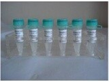 进口标准品CAS号:104691-34-1标准品d2-头孢特仑