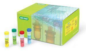 大肠杆菌(O157:H7)核酸检测试剂盒(PCR-荧光探针法)