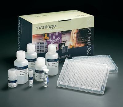 大鼠维生素D ELISA试剂盒