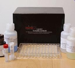 大鼠抗IgE受体抗体ELISA Kit