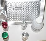 康乃馨潜伏病毒(Carnation Latent Virus)ELISA试剂盒