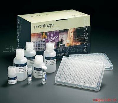 小鼠硫氧化还原蛋白ELISA试剂盒