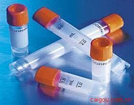高尔基体磷蛋白2(GOLPH2)抗体