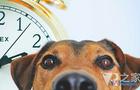 美国西北大学用VR技术研究动物对时间的衡量感知