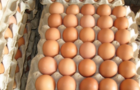 抗生素残留超标的鸡肉是否有害抗生素残留速测仪