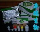 人β内啡肽受体(β-EPR)Elisa试剂盒