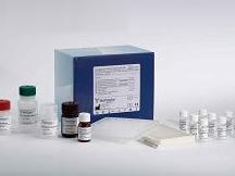 大鼠载脂蛋白A1(apo-A1)ELISA试剂盒