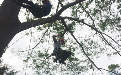 DJ-SRT爬树培训在西双版纳热带植物园举行